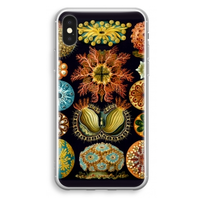coque-transparente-iphone-xs - Haeckel Ascidiae