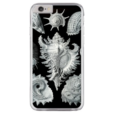 Haeckel Prosobranchia